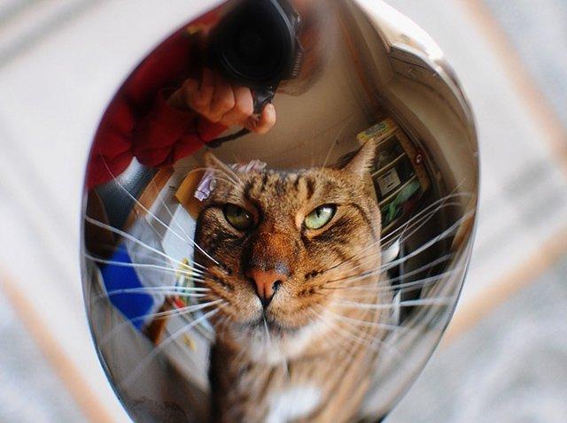 зеркальное отражение в ложке