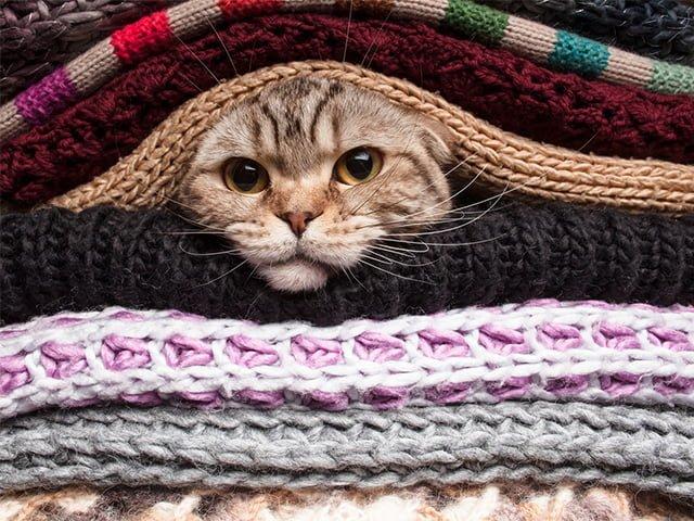 кошачья шерсть на одежде