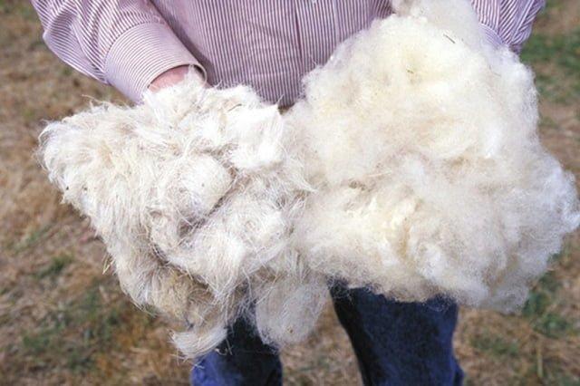 овечья шерсть для зимней одежды