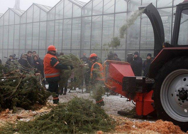 утилизация елок после нового года
