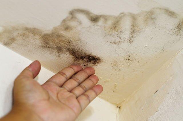 грибок на потолке в квартире