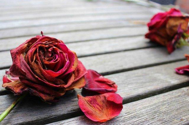 завявшие розы