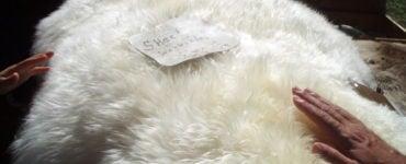 Натуральный мех овцы