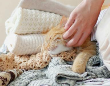 Как убрать шерсти домашних животных с одежды